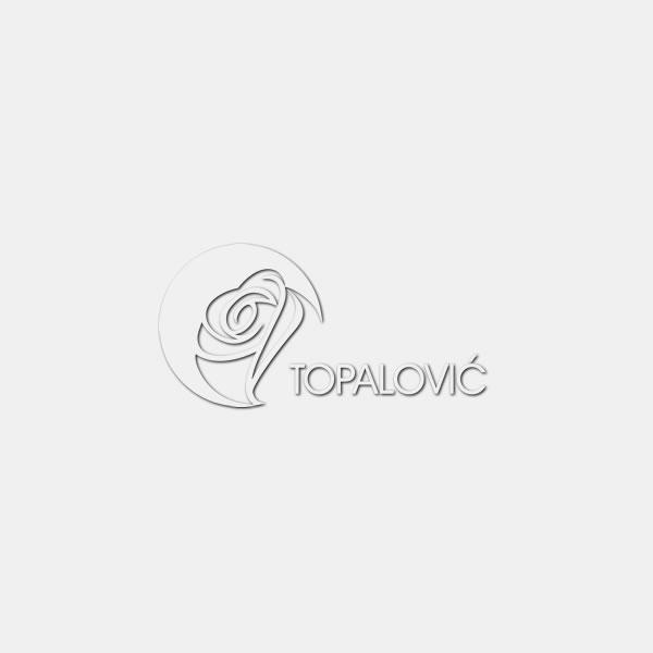 Photinia serrulata 'Red Robin' - Špalir