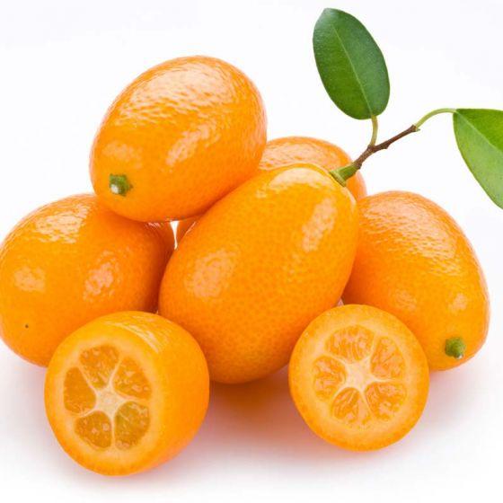 Citrus fortunela (Kumquat) • Trogodišnja • C 4 • 60/80 cm