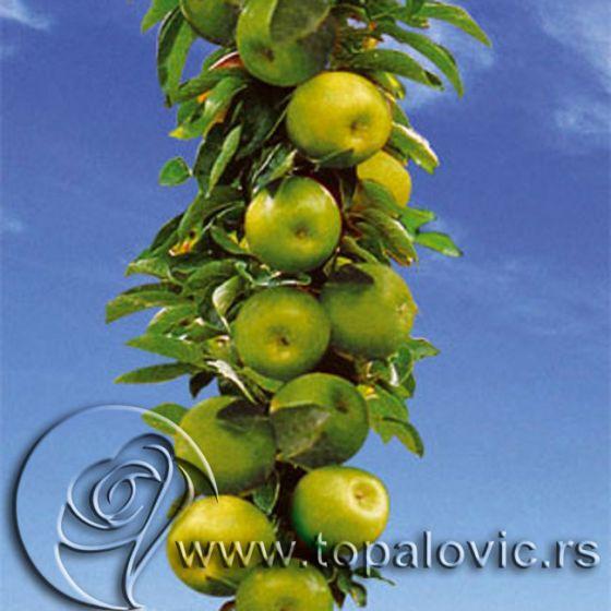 Stubasta jabuka 'Bolero'
